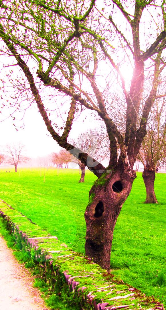 Bruno Antony-Thouret (bruno antony) - Un arbre auto stoppeur