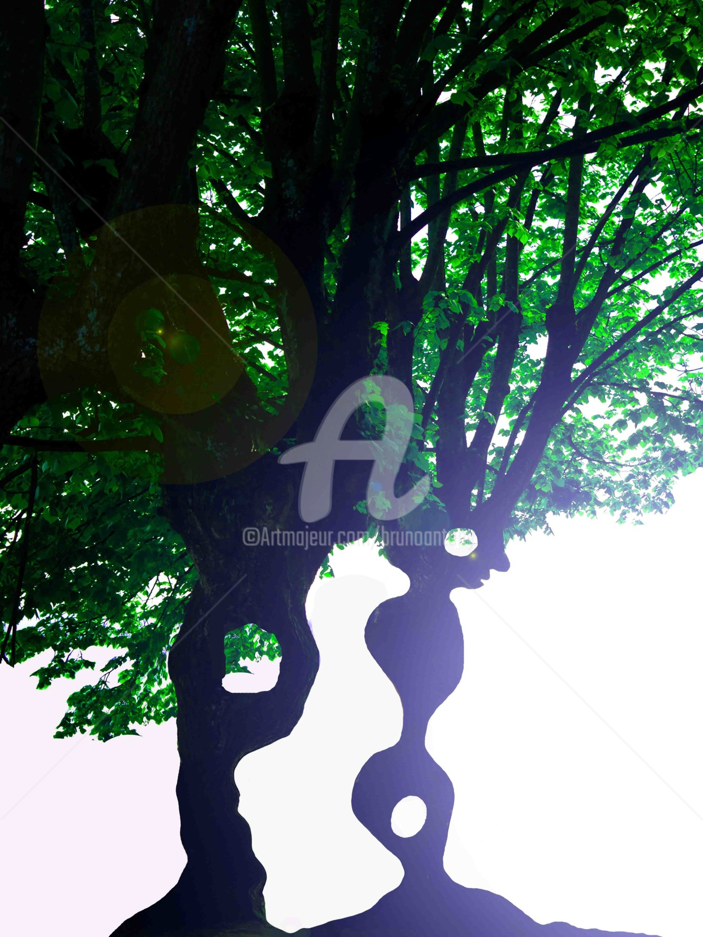 Bruno Antony-Thouret (bruno antony) - Oisarbre vers la lumière