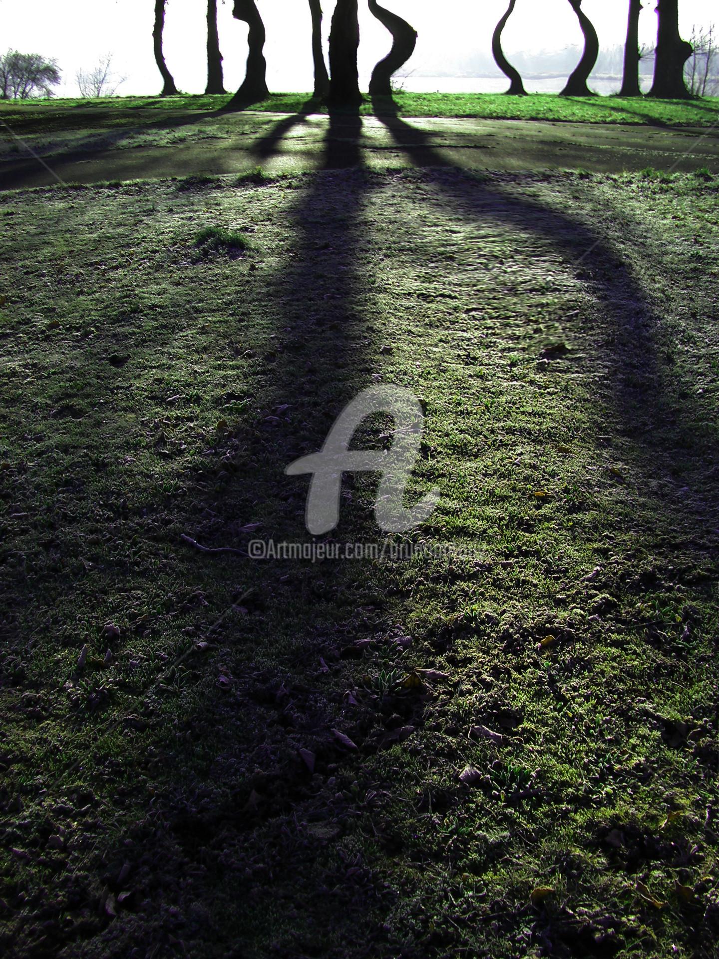 Bruno Antony-Thouret (bruno antony) - La confrérie des arbres