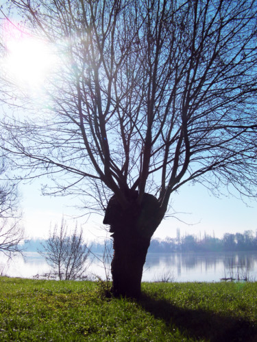 j'ai parlé à un deuxième arbre aujourd'hui